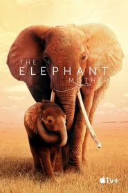 The Elephant Mother streaming vf