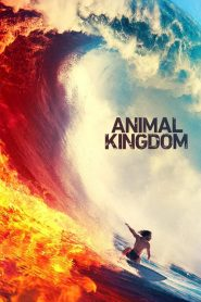 Animal Kingdom streaming vf